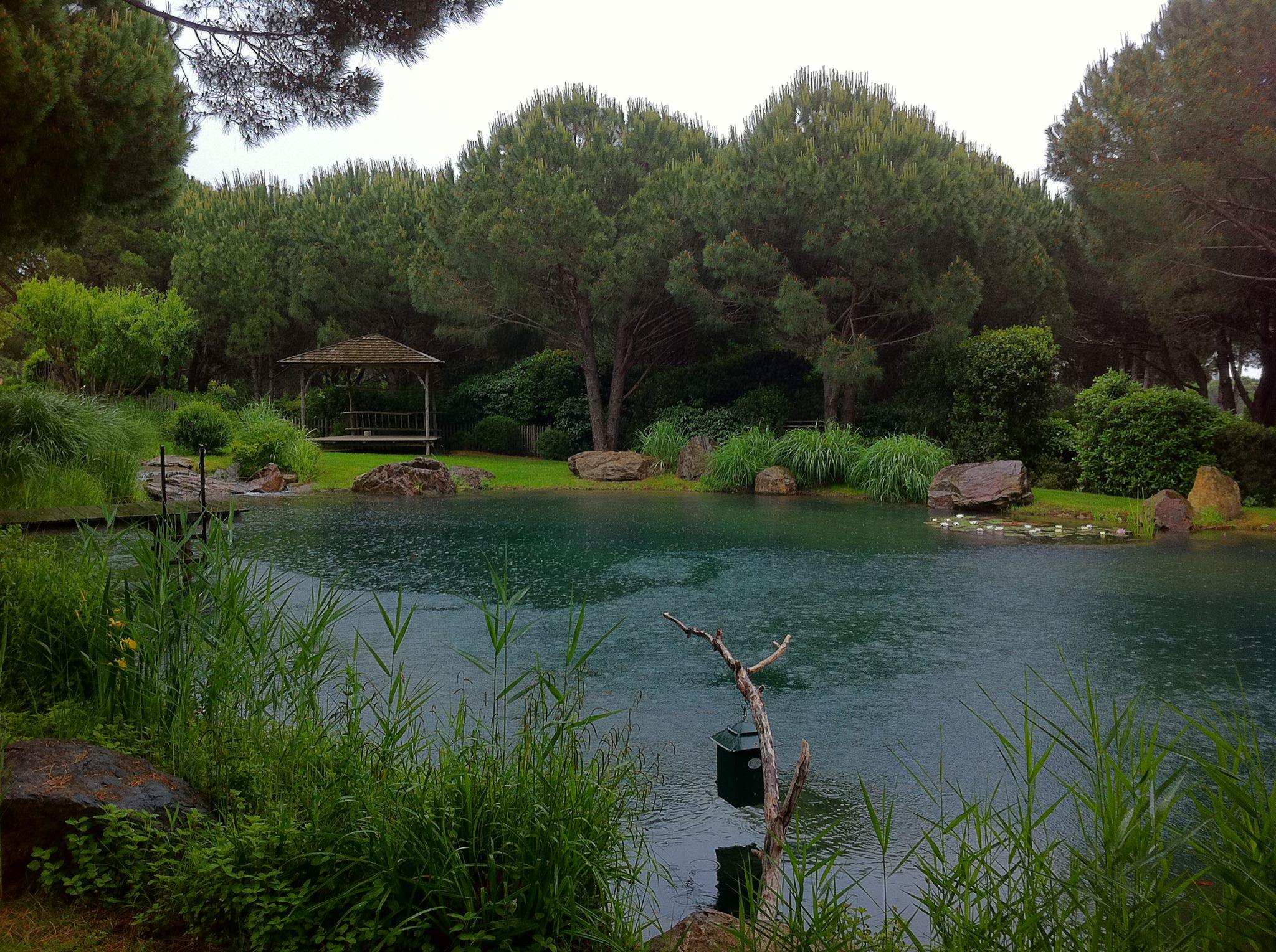 Construction et entretien de bassin et d 39 tang sur saint tropez aix en provence et cannes par - Plantes bassin de lagunage aixen provence ...