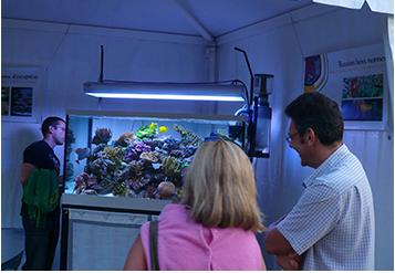 Création d\'aquariums sur-mesure, viviers et bassins sur Saint ...