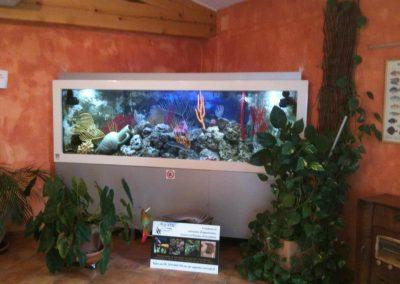 aquarium gris